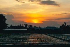 Силуэт, сумерк захода солнца на ферме и небо orang Стоковые Изображения