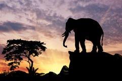 Силуэт слона Стоковая Фотография RF