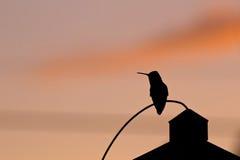 Силуэт тени колибри на заходе солнца Стоковые Изображения