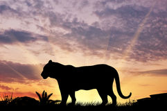 Силуэт тигра Стоковая Фотография