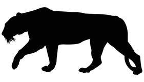 Силуэт тигра Стоковое фото RF