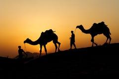 Силуэт торговца верблюда пересекая песчанную дюну во время солнца Стоковое Изображение