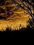 Силуэт травы и деревьев Стоковое Изображение RF