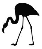 Силуэт фламинго Стоковые Изображения RF