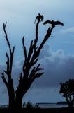 Силуэт хищников Турции Стоковая Фотография RF
