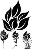 Силуэт цветка Стоковая Фотография RF