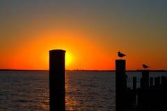 Силуэт чайки захода солнца Стоковые Фото