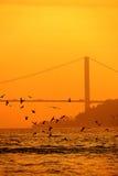 Силуэт чайки с мостом Bosphorus Стоковое Изображение RF