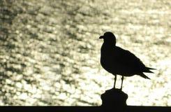 Силуэт чайки Стоковые Фото