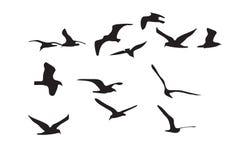 Силуэт чайок черный на белой предпосылке вектор Стоковое Изображение