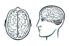 Силуэт человеческой головы с мозгом иллюстрация вектора