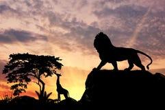 Силуэт льва Стоковые Фото