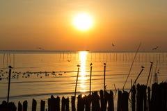 Силуэт Seashore с летанием птицы в заходе солнца Стоковое Изображение RF