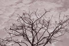 Силуэт Sepia ветвей дерева стоковая фотография rf
