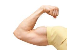 Сильная мужская рука показывает бицепс стоковые изображения