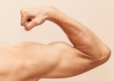 Сильная мужская рука показывает бицепс стоковое фото rf