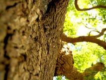 Сильное дерево с блеском солнца Стоковое Изображение