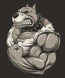 Сильное свирепое pitbull бесплатная иллюстрация