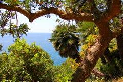 Сильно изогнутое дерево на предпосылке моря Стоковое Изображение RF