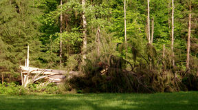 Сильные ветеры опровергли редкие деревья в парке Стоковое Фото