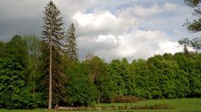 Сильные ветеры опровергли редкие деревья в парке стоковые изображения