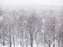 Сильный идти снег над древесинами в зиме Стоковые Изображения RF