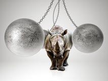 Сильный как носорог Стоковое фото RF