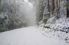 Сильный снегопад на замотке дороги горы в лесе евкалипта, Au Стоковая Фотография RF