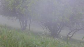 Сильный туман покрывает ландшафт леса Лето зеленые валы видеоматериал