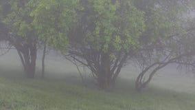 Сильный туман покрывает ландшафт леса Лето зеленые валы акции видеоматериалы