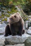 Сидя медведь Стоковое Фото