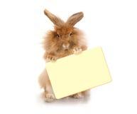 Кролик держа плиту Стоковое Изображение