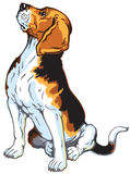 Сидя собака бигля Стоковое Изображение RF