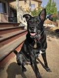 Сидя собака Стоковые Фотографии RF