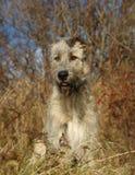 Сидя собака Стоковое Изображение