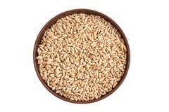 Сказанная по буквам пшеница dinkel зерна стоковые изображения