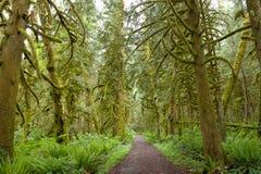 Сказка леса Стоковое Изображение RF