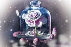 Сказка зимы, хранитель красоты защищает розу Стоковые Изображения RF