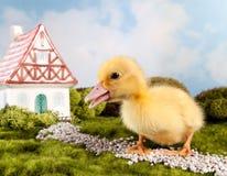 Сказка пасхи Стоковые Фото