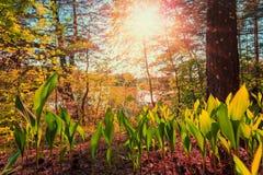 сказовый ландшафт лилия покидает солнечный свет чудесный, фантастичный, заход солнца стоковая фотография rf