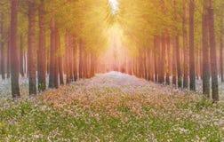 Сказочный лес весной стоковое фото rf