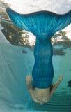 Сказ бикини и русалки раковины женщины нося Стоковые Изображения