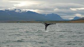 Сказ кита в фьорде Стоковое Фото