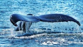 Сказ кита Стоковые Фотографии RF