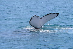 Сказ кита Стоковые Фото