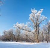 Сказ ` s зимы Стоковое фото RF