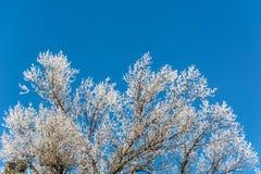 Сказ ` s зимы Стоковая Фотография RF