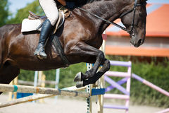 Скакать всадника лошади Стоковые Изображения RF