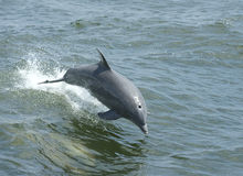 скакать дельфина стоковые фото
