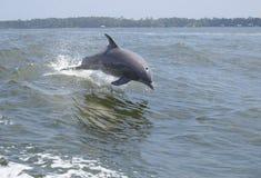 скакать дельфина стоковая фотография rf